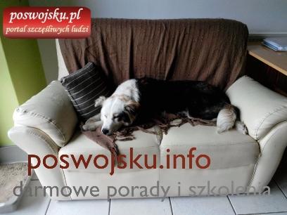 Pies ze schroniska - po pierwszej kąpieli
